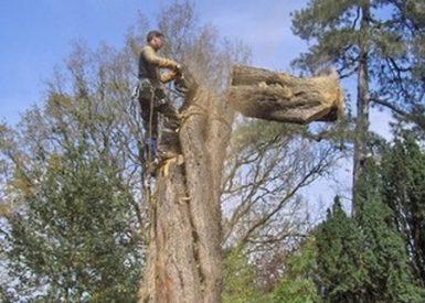 abattage arbre 44